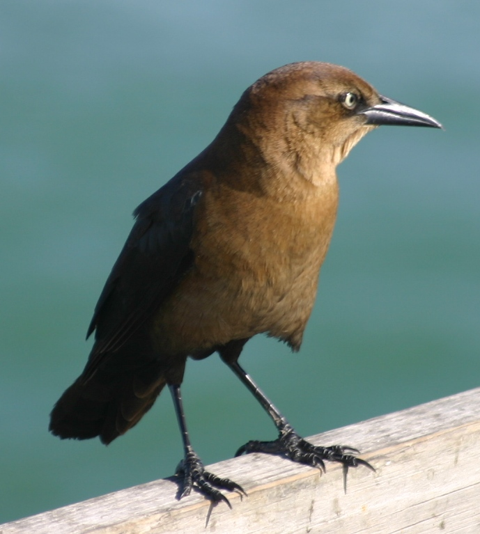 bird brown kure beach 111904.JPG