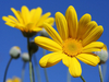 Yellow_Flower_3978_1600_1200