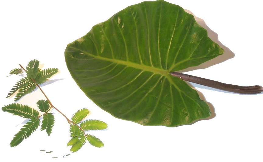 Leaves (Big and Small).jpg