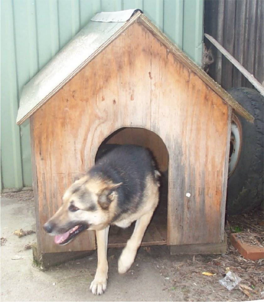 Dog Kennel1.jpg