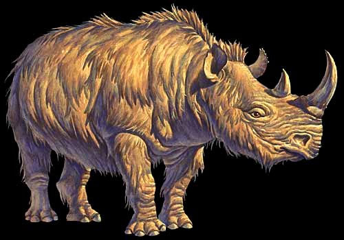 Woolly Rhinoceros.jpg