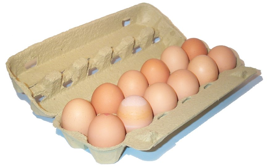 Egg carton open.jpg